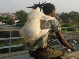 Bakra Eid - Funny Eid ul Azha HD Wallpapers _