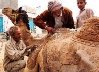 Camel Beauty Palar
