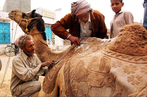 Camel Beauty Palar