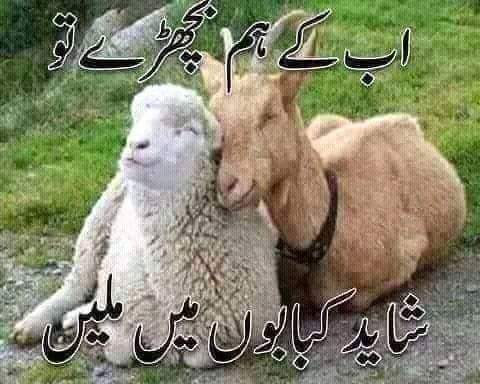 bkra eid funny wallpapers