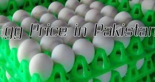 Egg Price in Pakistan October 2020