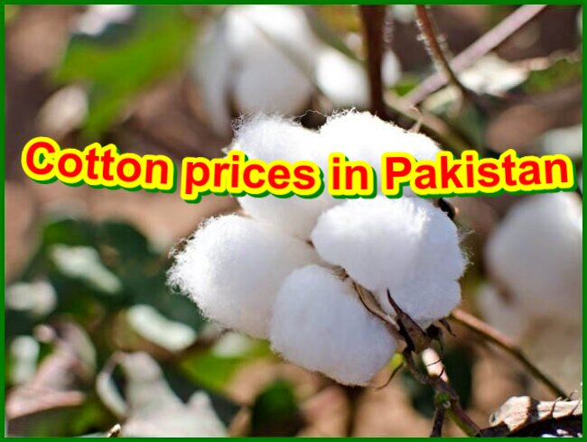 Cotton prices in Pakistan in April 2021